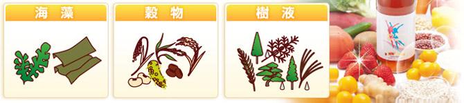 海藻・穀物・樹液